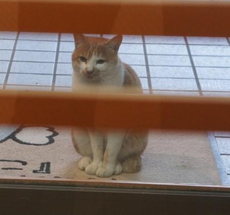 今板温泉湯本舘の看板猫…チャー