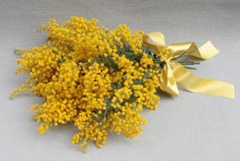 ミモザ花束